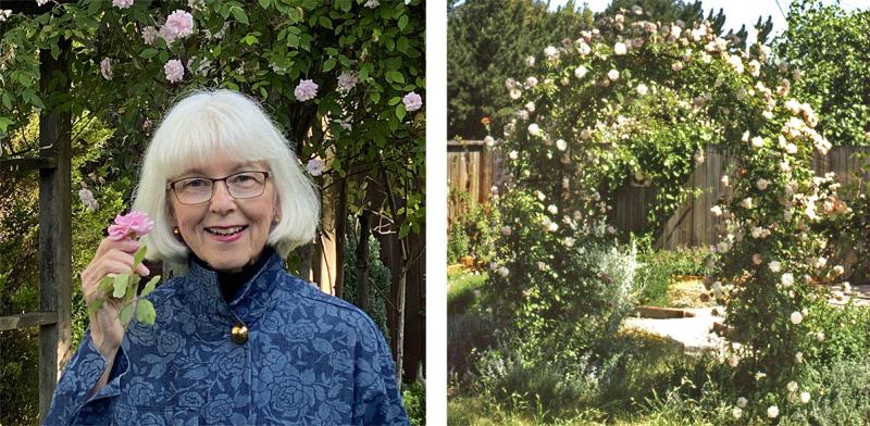 Carolyn Parker holding a Cecile Brunner rose
