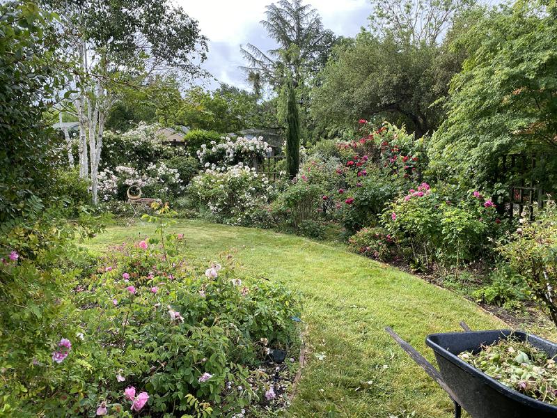 Rose_Garden_in_Front